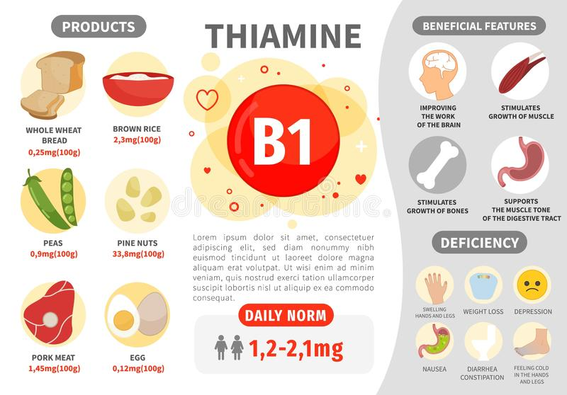 Infographics Vitamin B1. Products containing vitamin. Daily norm. Symptoms of deficiency. Vector medical poster vector illustration