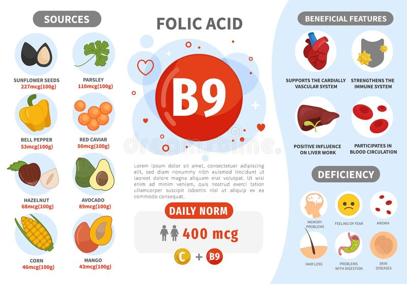 Infographics Vitamin B9. Products containing vitamin. Daily norm. Symptoms of deficiency. Vector medical poster royalty free illustration