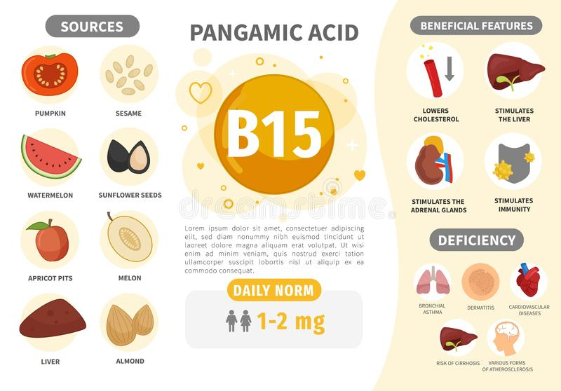 Infographics Vitamin B15. Products containing vitamin. Daily norm. Symptoms of deficiency. Vector medical poster royalty free illustration