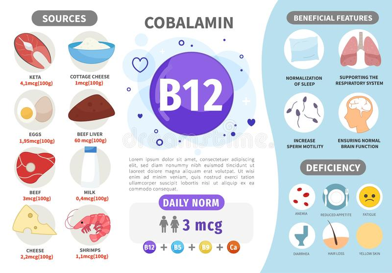 Infographics Vitamin B12. Products containing vitamin. Daily norm. Symptoms of deficiency. Vector medical poster vector illustration