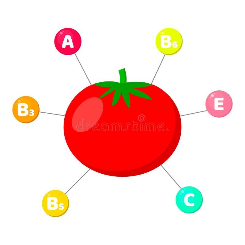 Infographics witaminy zawierać w warzywach śladów elementy w barwionych okręgach Pomidor ilustracja wektor