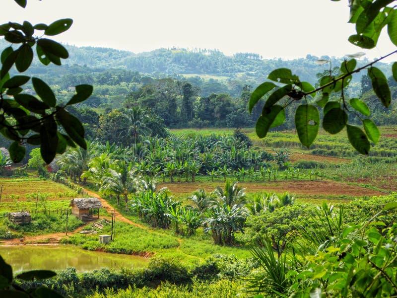 Informação da vista o vale de Vinales em Cuba foto de stock royalty free