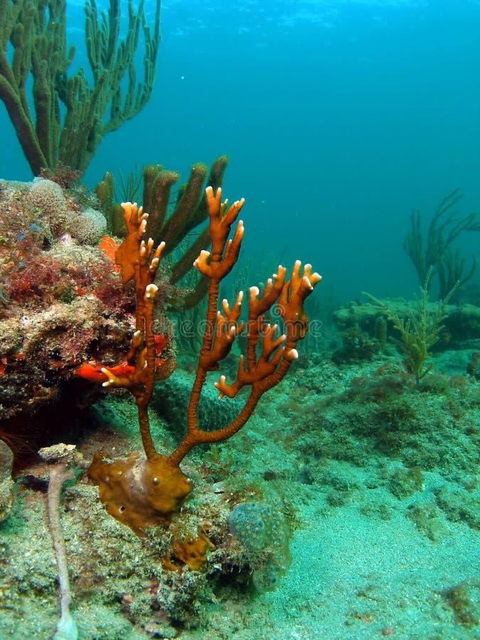 Inforni il corallo fotografia stock libera da diritti