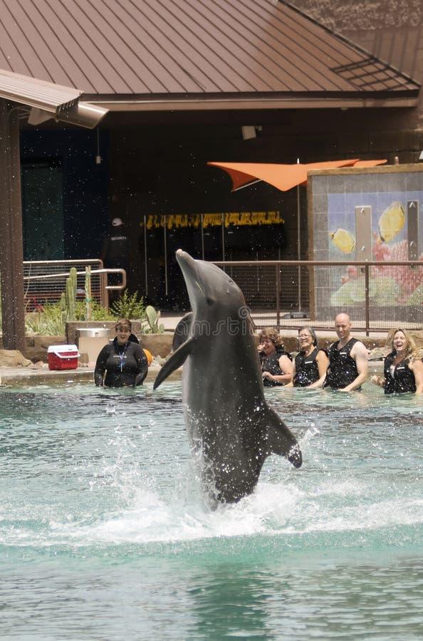 Infractions d'un dauphin pour des visiteurs chez Dolphinaris, Arizona photographie stock