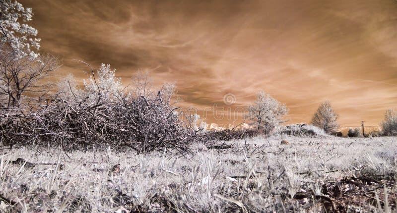 infraröd liggande royaltyfri foto