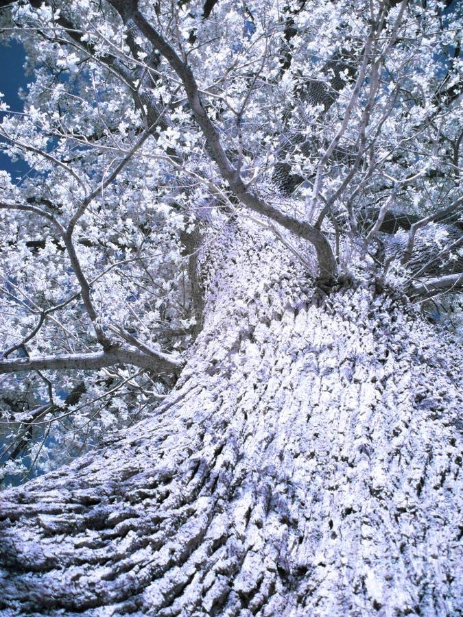 infraröd tree royaltyfria foton
