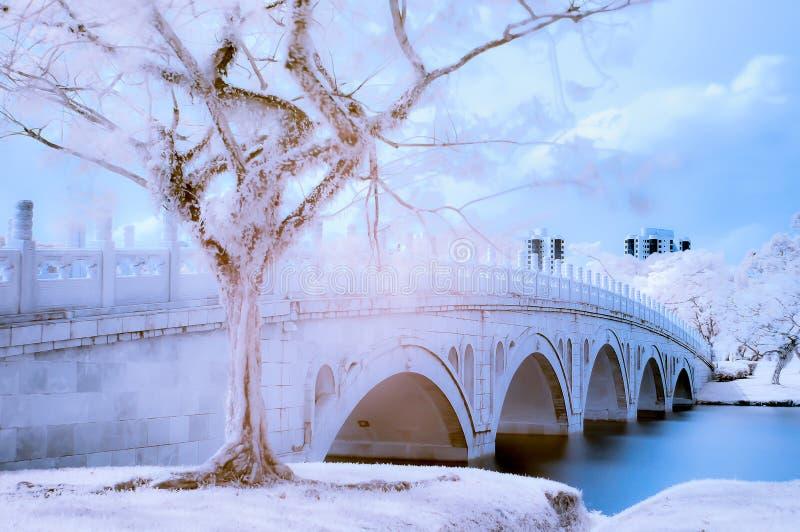 Infrarött foto av trädet och bron royaltyfri bild