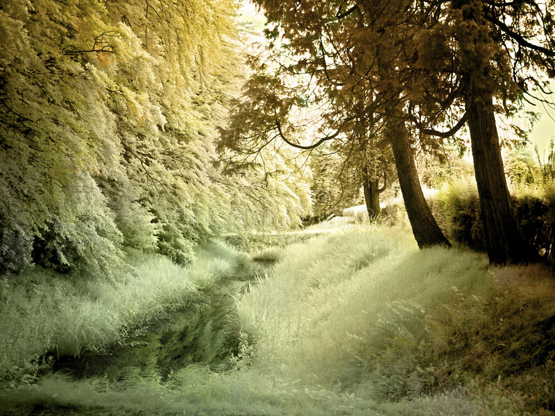 Infrared brook. Little park brook shot with an infrared filter on camera (no photoshop effect stock photography