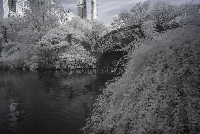 Infrared del Central Park immagine stock