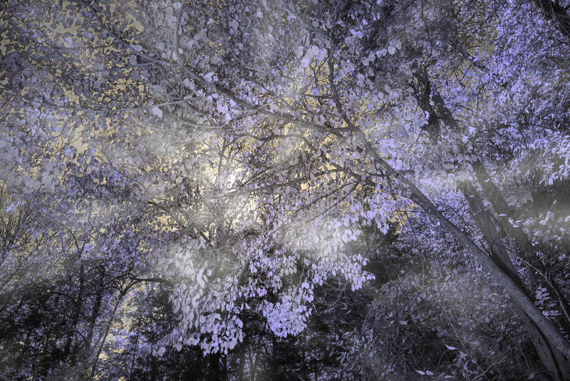 Infrared forest shot with light rays shining throw it. Shot in Dalohnega, GA royalty free stock photography