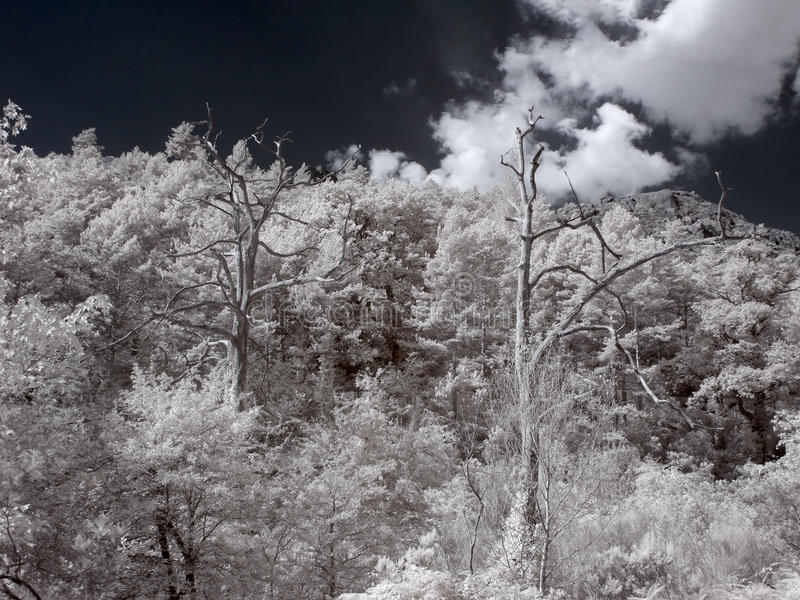 Infrared Geres drewna zdjęcia stock