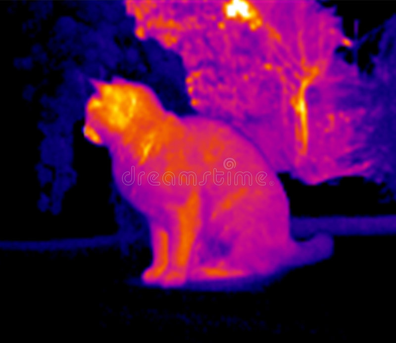 Infrared image of cat. An infrared image of a sitting cat in black and red color gamut stock images