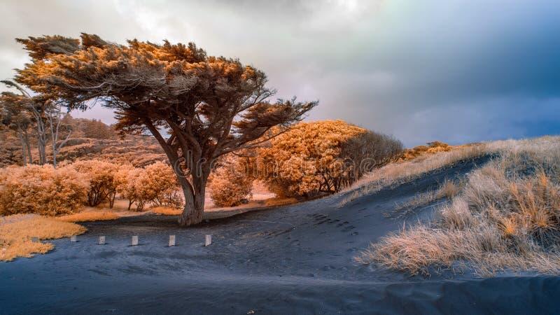 Infrared image of vegetation amongst sand dunes royalty free stock photo