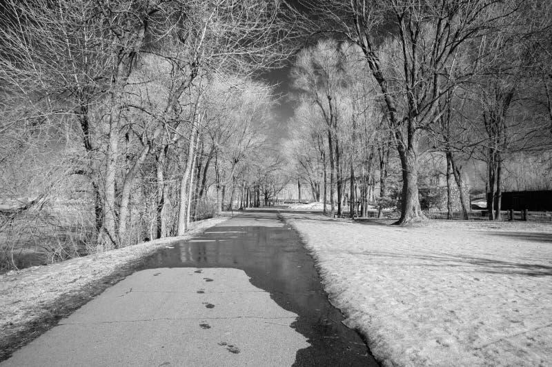 Download Infrared Landscape stock image. Image of wood, vegetation - 8621615
