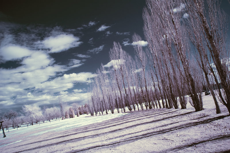 Download Infrared Landscape stock image. Image of weather, wood - 8621955