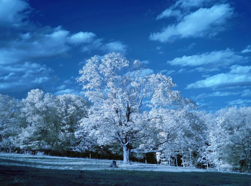 Infrared Landscape. An infrared landscape with trees, clouds and the sun shining royalty free stock photo