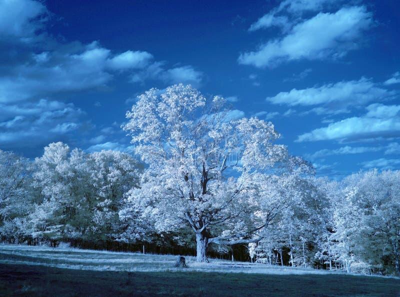 Infrared landskap royaltyfri foto