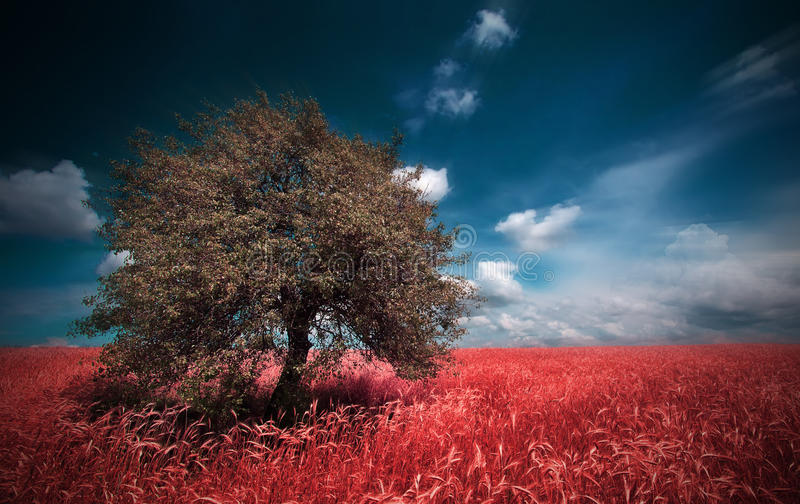 Infrared landskap arkivfoton
