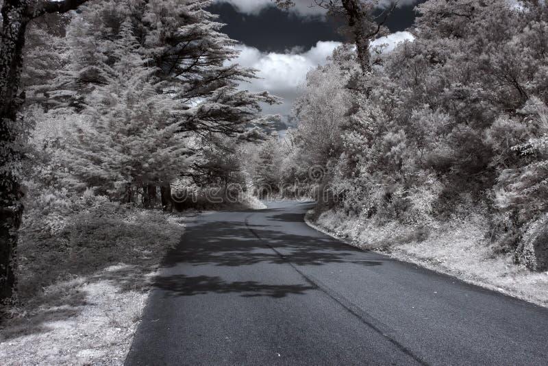 Infrared lasowa droga zdjęcia royalty free