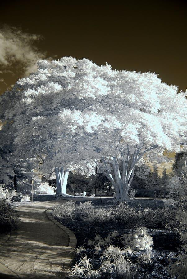 Free Infrared Park Royalty Free Stock Photos - 16467928