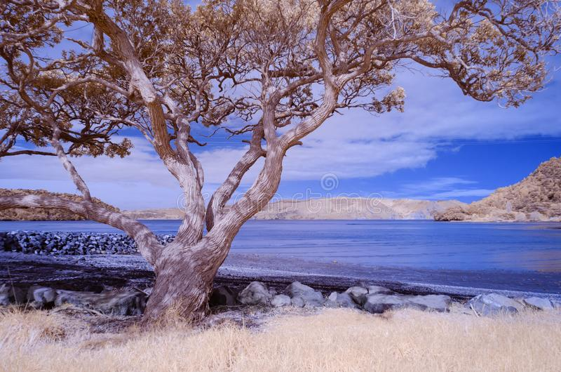 Infrared photo of a beach landscape with a tree in the foreground. Seen in false colors royalty free stock images