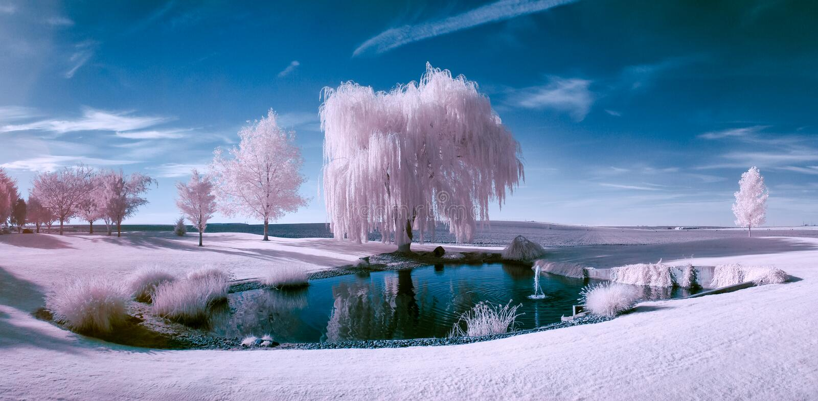 Infrared scene of a pond and trees. On a beautiful sunny day stock photos