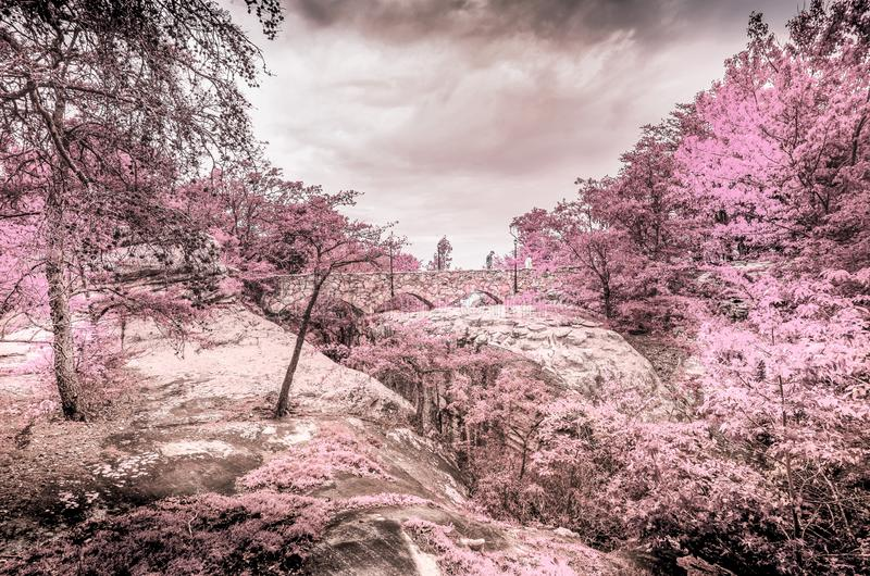 Infrared special effect in mistery garden fantasy. Infrared special effect photo in mistery garden fantasy stock image