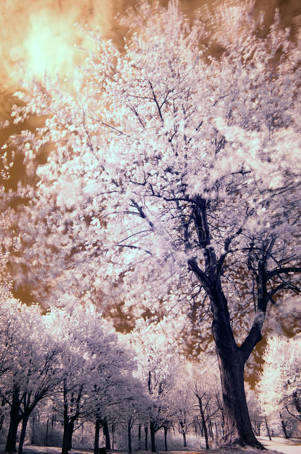 Download Infrared Tree stock image. Image of earth, calm, landscape - 9612451