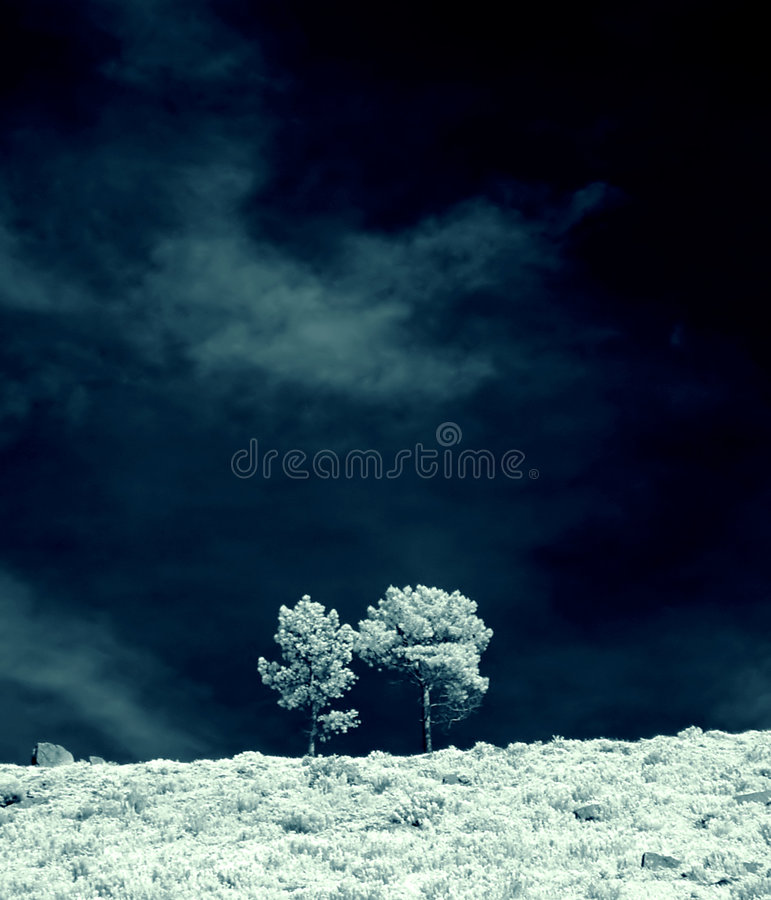 Free Infrared Trees Royalty Free Stock Images - 1945969