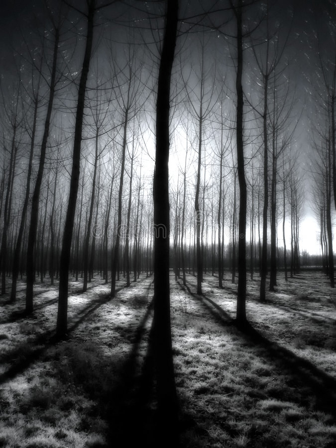 Free Infrared Trees In The Morning Royalty Free Stock Image - 8873356