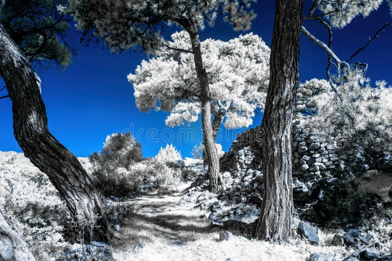 Infrared view of foilage and trees shot with 665 nanometer converted dedicated camera. Infrared view of foilage and trees shot with 665 nanometer converted and royalty free stock images