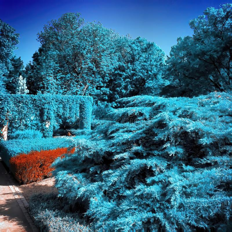 Free Infrared View Of Outdoor Public Park Stock Images - 164625764