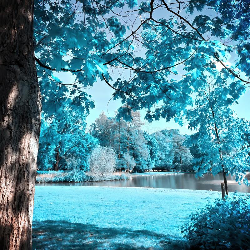 Free Infrared View Of Outdoor Public Park Stock Image - 164637171