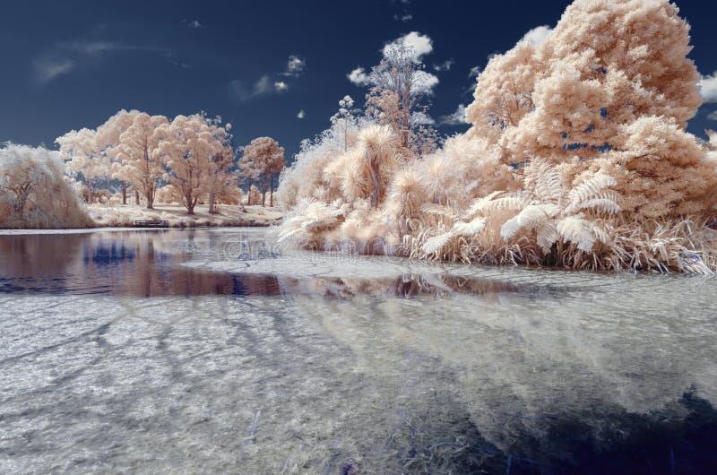 Infrared wizerunek jezioro z podwodnym rośliien i chmur refle zdjęcie stock