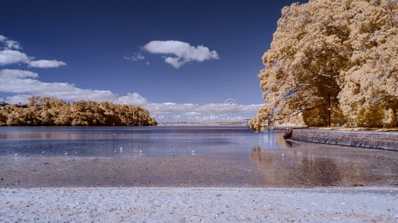 Infrarode foto van een steenachtig strand met zeevogels op het water opnieuw royalty-vrije stock afbeelding