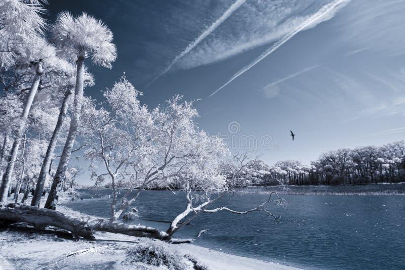 Infrared van strand en palmen royalty-vrije stock foto's