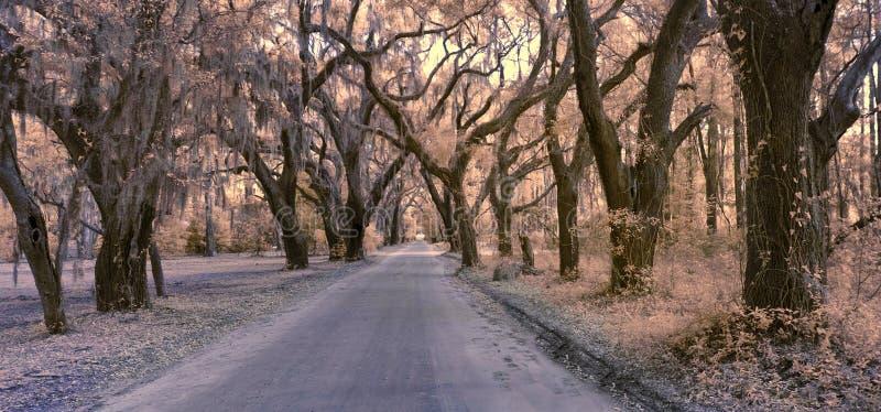 Infrarode foto van weg en bosluifel royalty-vrije stock fotografie