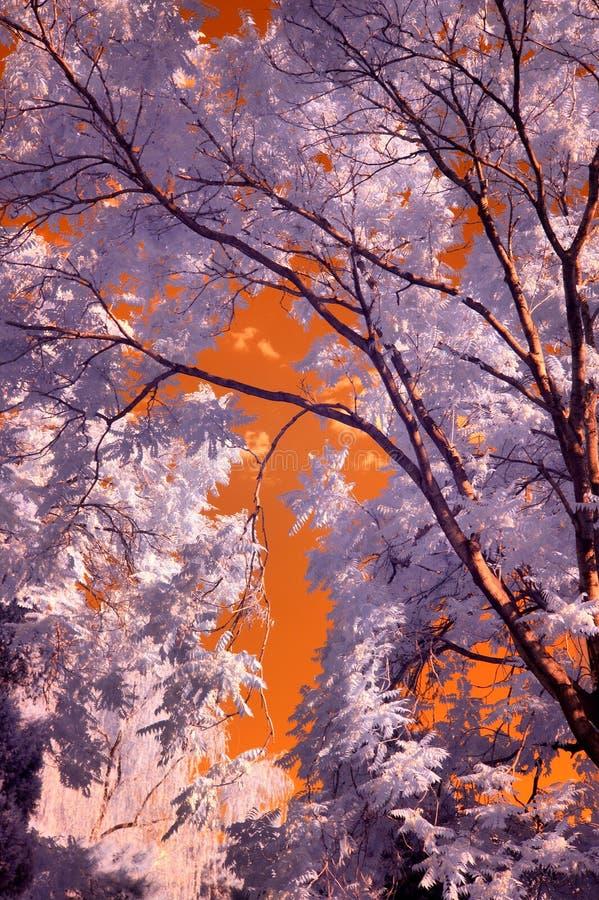 Infrarode Fotografie stock afbeelding