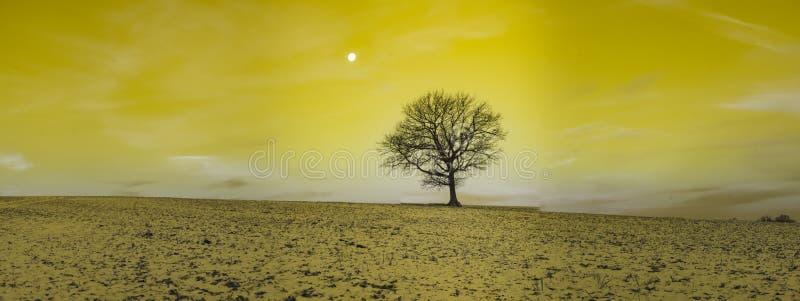 Infrarode fotografie - in foto van landschap met boom onder hemel met wolken royalty-vrije stock foto's