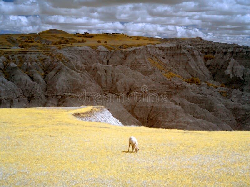 Infrarood Badlands Nationaal Park, Zuid- Dakota royalty-vrije stock afbeelding