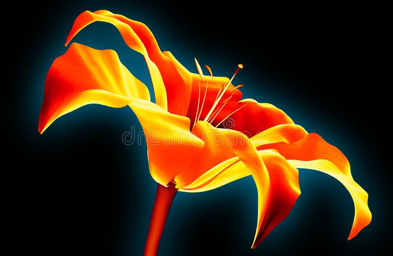Infrarood die beeld van een bloem op zwarte, de 3d illustratie van Amaryllis wordt geïsoleerd vector illustratie