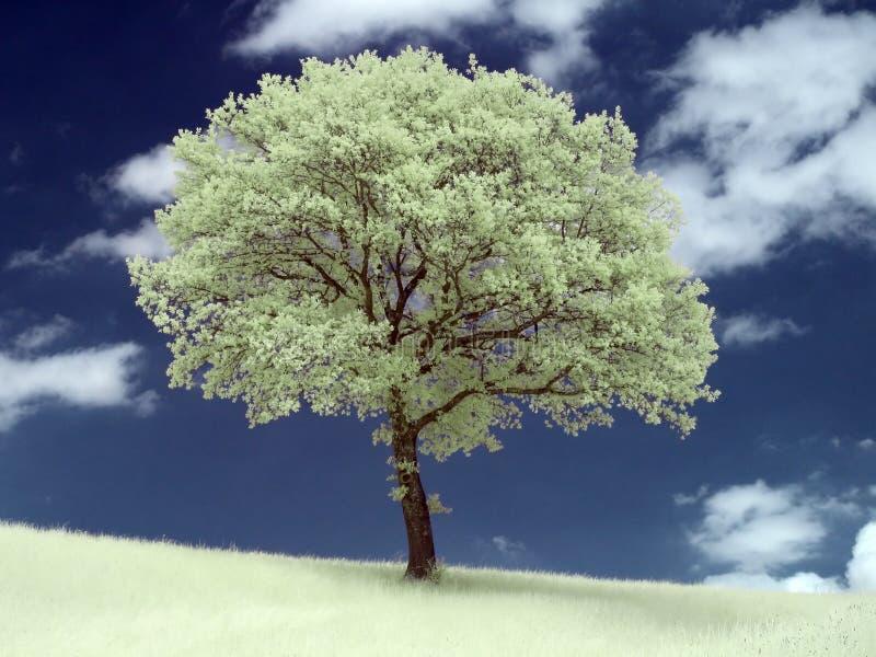 Infrarotbaum lizenzfreies stockfoto