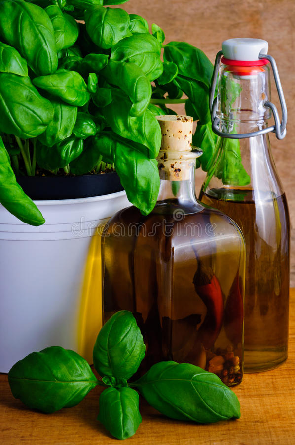 Infused herbal oil and basil royalty free stock photos