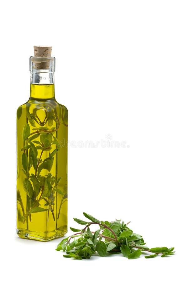 infused mejram oil olivgrön arkivbild
