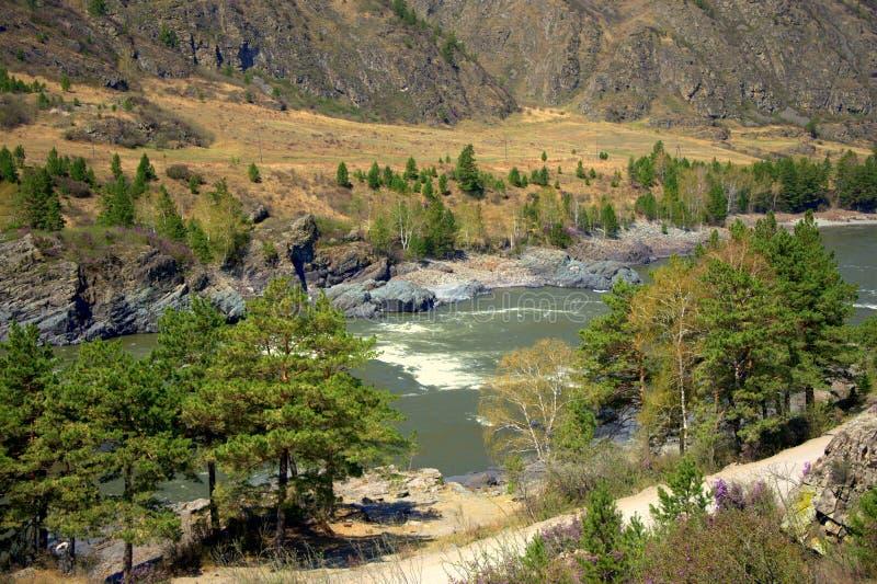 Ing?ngen p? floden Katun som omges av berg som t?ckas med barrskogen fotografering för bildbyråer