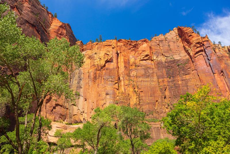 Ingången till härligt den jungfruliga floden begränsar kanjonen i Zion National Park, Utah royaltyfria foton
