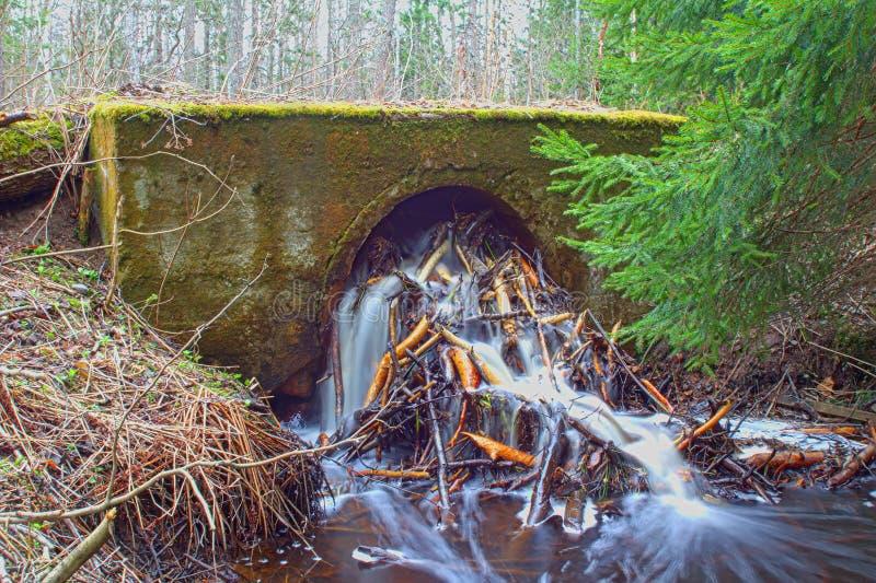 Ingénierie hydraulique et construction de routes 1 de dommages de castors image libre de droits