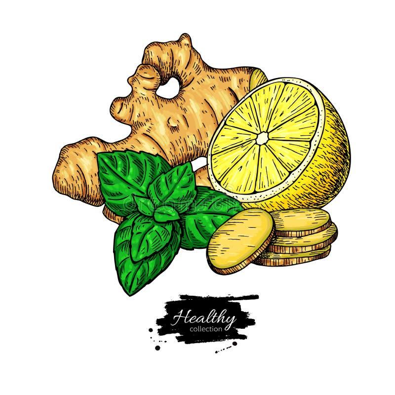 Ingefära-, citron- och mintkaramellvektorteckning Rota hearbbladet, och fruktskivan skissar vektor illustrationer