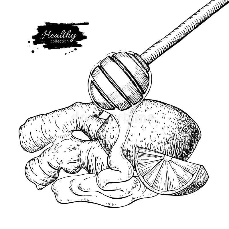 Ingefära-, honung- och citronvektorteckning Träsked, honungdroppe stock illustrationer