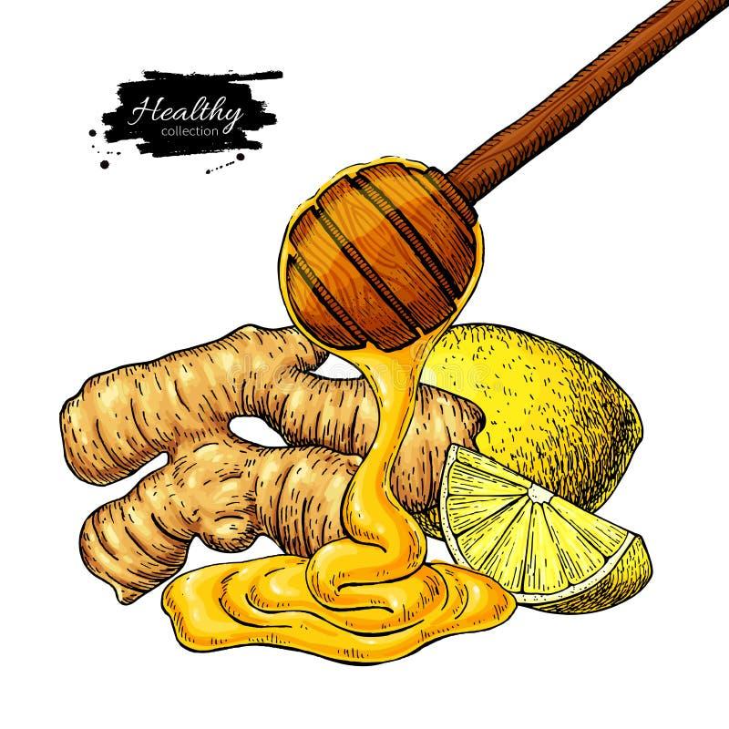 Ingefära-, honung- och citronvektorteckning Träskeden, honungdroppe, rotar, och fruktskivan skissar vektor illustrationer